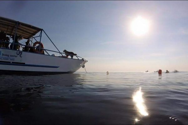 todos los fines de semana en palamos hacemos salidas de barco