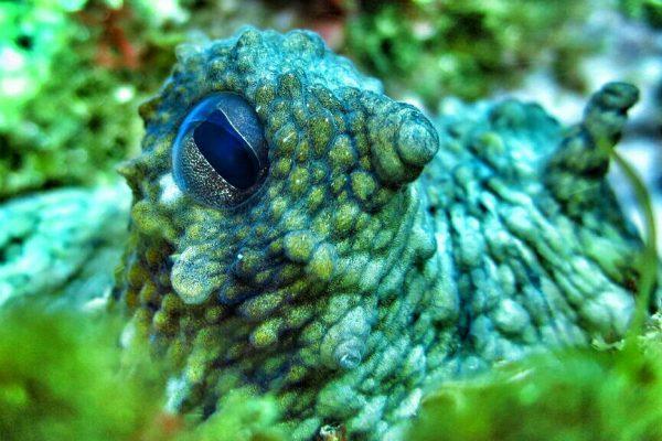 foto subacuatica con camara compacta